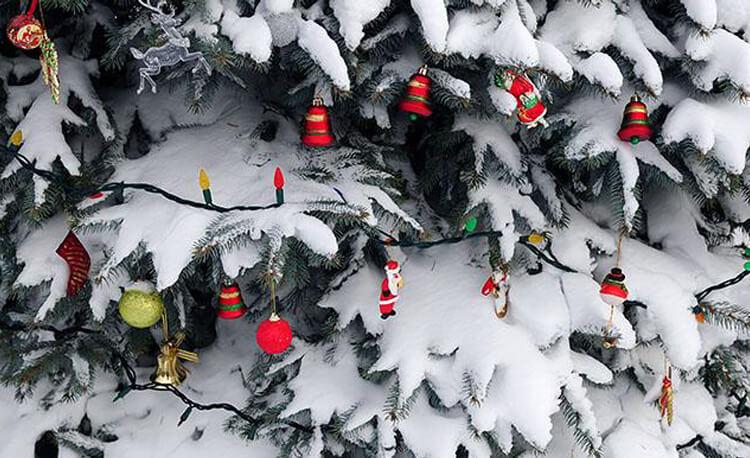 Granen – en av julens mest omtyckta symboler featured image