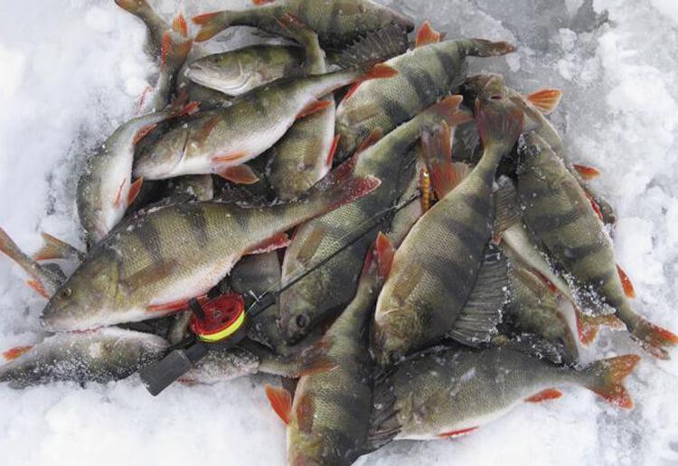 Pilkfiske – kallt men kul featured image