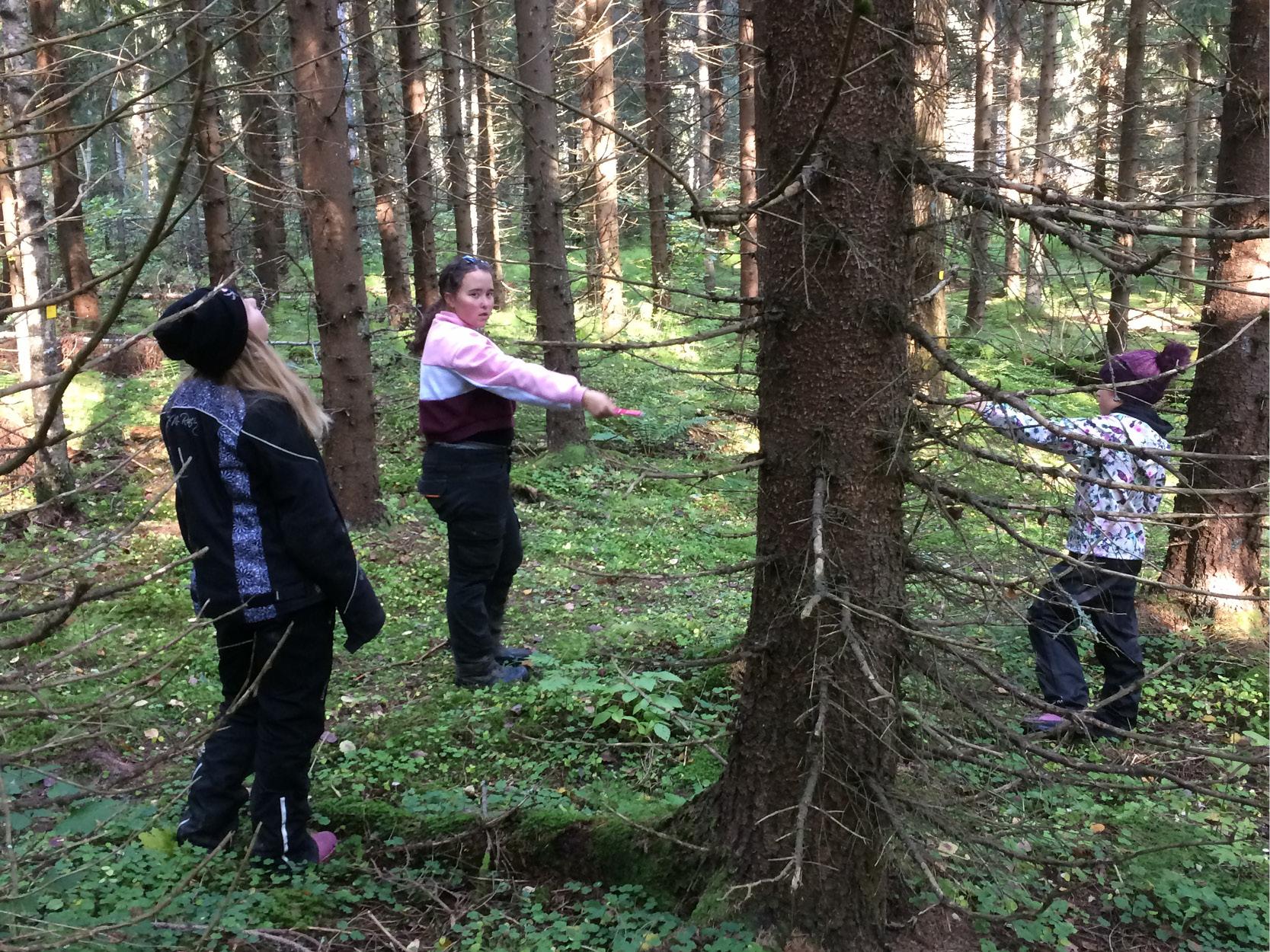flickor ser på träd i skogen