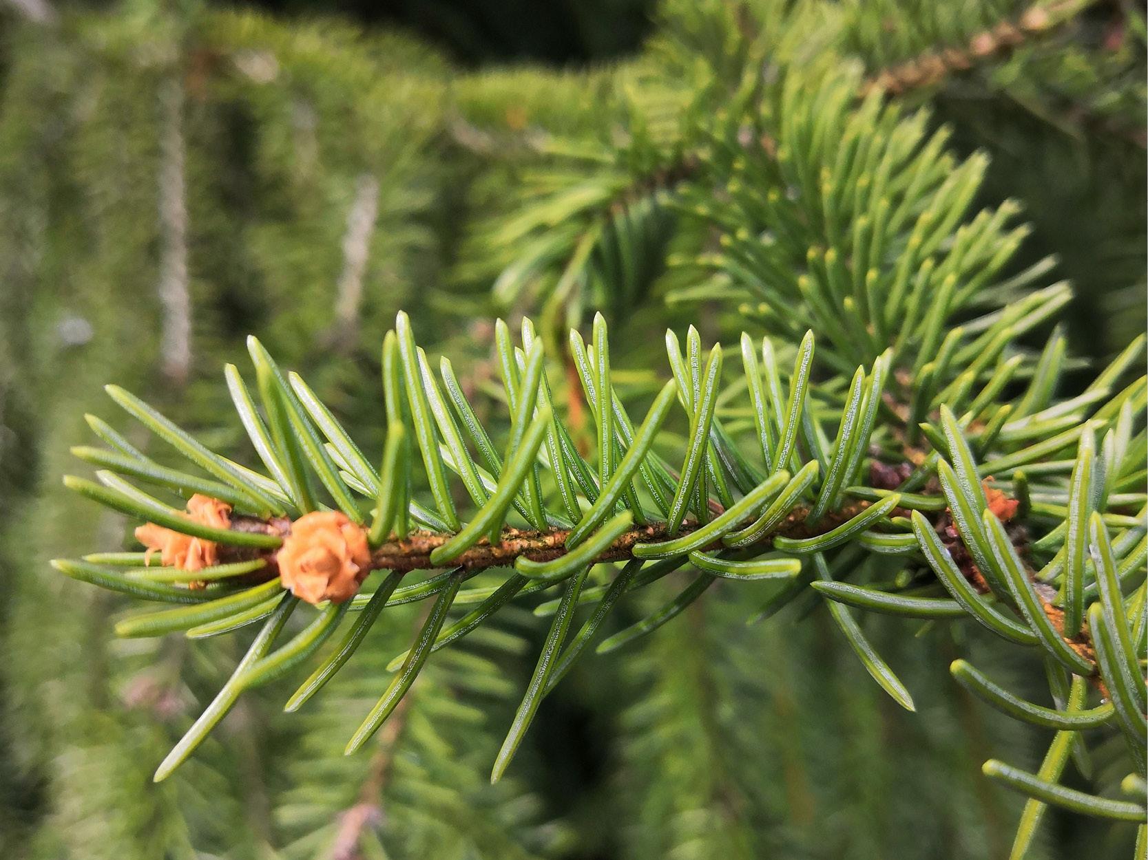 Lär känna träd och växter i skogen featured image